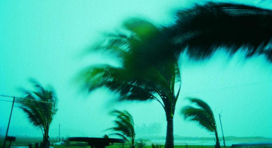 photo of palm trees in a hurricane