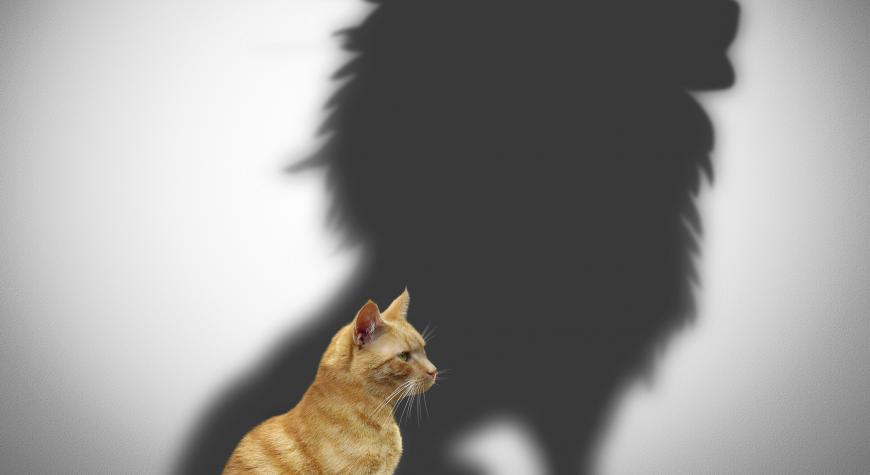 photo of cat with lion shadow