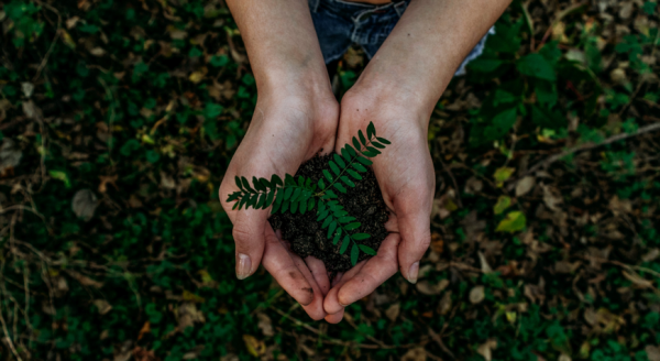 Photo of a plant and dirt in hands